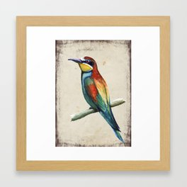 Bee-eater Framed Art Print