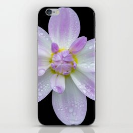 Porcelain Dahlia With Dewdrops iPhone Skin
