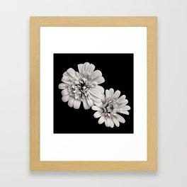 Cape marguerites Framed Art Print