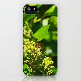 A Bee Gathering Pollen On English Ivy iPhone Case
