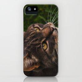 Cat by Giada Ciotola iPhone Case