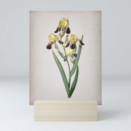 Vintage Elder Scented Iris Botanical on Parchment Mini Art Print