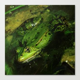 kiss the frog Canvas Print