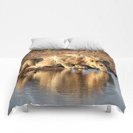 Reflections 4 Comforters