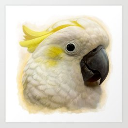 Sulphur Crested Cockatoo realistic painting Art Print