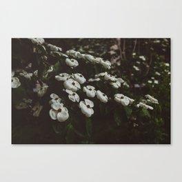 Highline Blooms IV Canvas Print