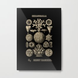 """Hexacoralla"" from ""Art Forms of Nature"" by Ernst Haeckel Metal Print"
