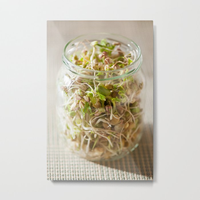 Many cereal sprouts growing Metal Print