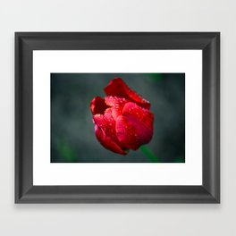 Red Tulip Framed Art Print