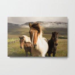 Wild Horses Photo Metal Print