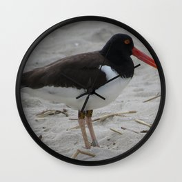 Oyster Catcher at Cape May Wall Clock