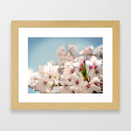 Spring, Flower Photography, Pastel, Pink, Romantic Cherry Blossom, Art Deco - 8 x 10 Wall Decor Framed Art Print