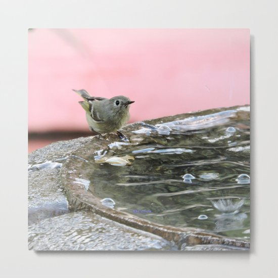 Kinglet at the Basin Rim Metal Print
