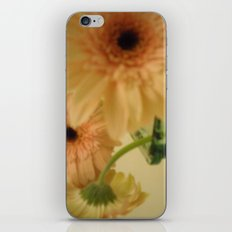 baby-pink daisy-petals ~ flowers iPhone & iPod Skin