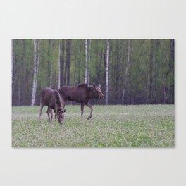 Moose Baby Canvas Print
