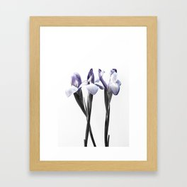 Color Painting with an Iris Framed Art Print