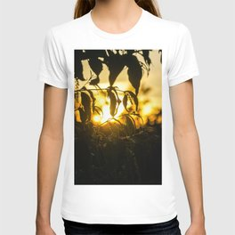 Sunset through the trees T-shirt