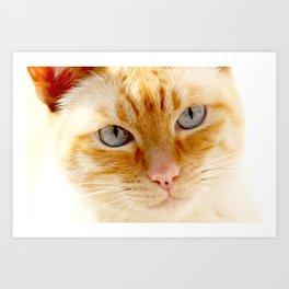 Cat with the blue eyes, cute cat face print Art Print