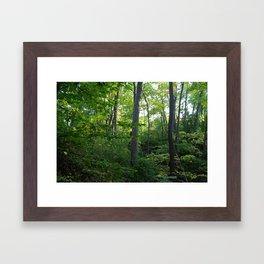 Splendor in the Woods Framed Art Print