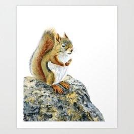 Bright-eyed and Bushy-tailed by Teresa Thompson Art Print