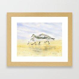 Trio Sandpipers Framed Art Print