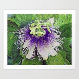 Passion Fruit Blossom Art Print