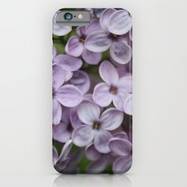 Close Up Of Persian Lilac Blossom iPhone Case