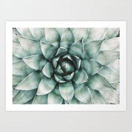 Succulent Plant, Desert Wall Art, Boho Decor, Cactus Print Art Print