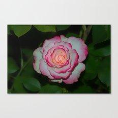 Cherry Parfait Rose Canvas Print