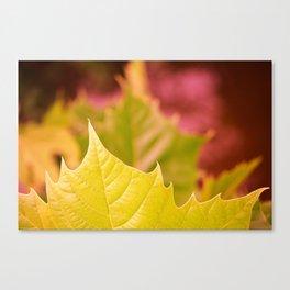Golden Olive Sycamore Leaf Canvas Print