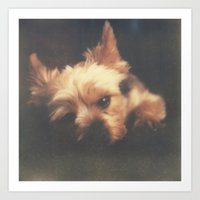yorkie Art Prints featuring yorkie by tyler tyndell