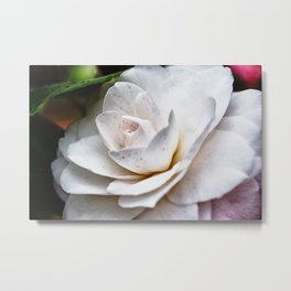 Freckled Rose Metal Print