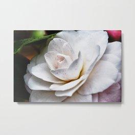 Freckled Rose Metal Print