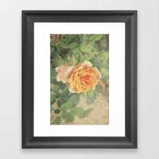 A rose in it's prime Framed Art Print