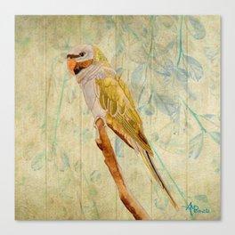 Derbyan Parakeet I Canvas Print