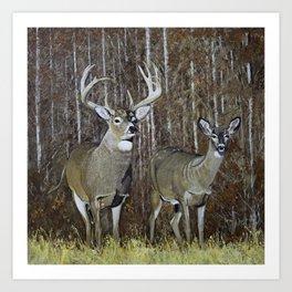 White Tail Couple oil Painting Print Art Print