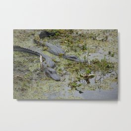 A pair of Alliogators Metal Print
