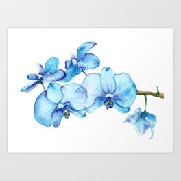 Blue Orchids Two - Watercolor Art Print