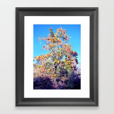 Autumn Lone Tree Framed Art Print