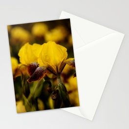 Yellow and Maroon Irisis Stationery Cards