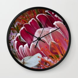 Lovely Feather Protea Wall Clock