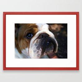Bulldog Baby Framed Art Print