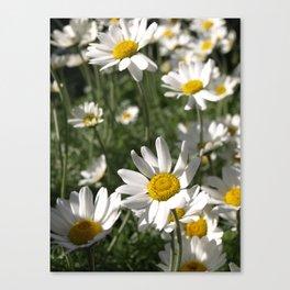SUN WORSHIPPING DAISY FLOWERS Canvas Print