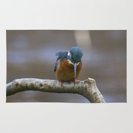 Kingfisher in the rain Rug