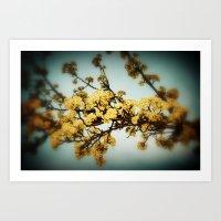 Blossoms Print Art Print