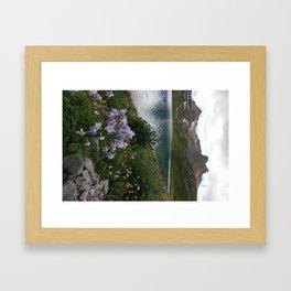 Colorado Columbine at Ice Lake Framed Art Print