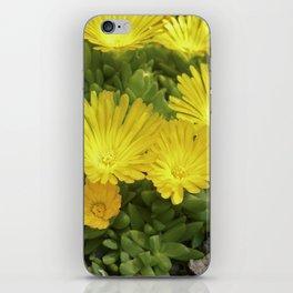 yellow cactus bloom IV iPhone Skin