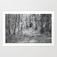 Forest Track Art Print