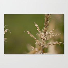 Macro Harvest Canvas Print