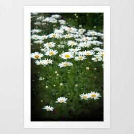White Daisy Field Art Print